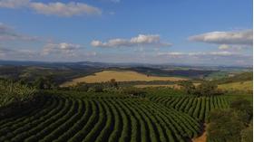 Brazylia Fazenda Salto