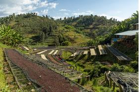 Rwanda Intego